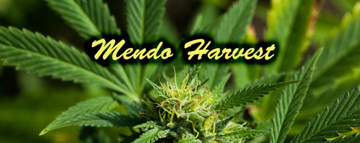 Mendo Harvest