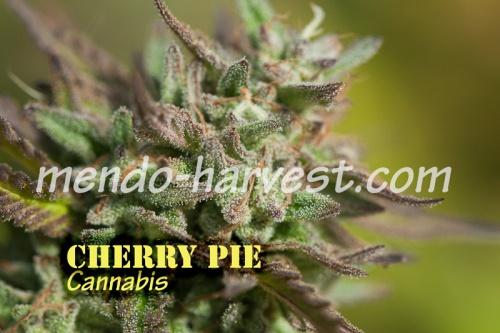 CherryPie-nameWM.jpg