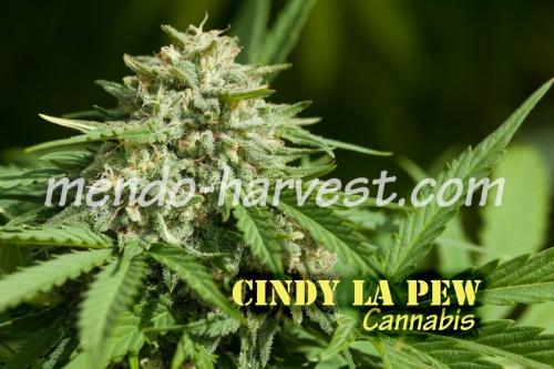 CindyLaPew-nameWM.jpg