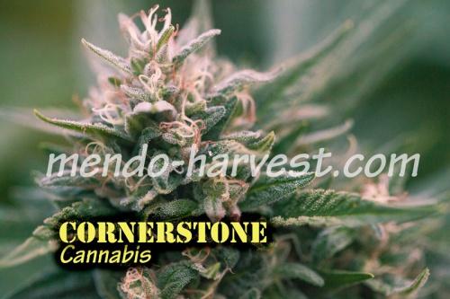 Cornerstone-nameWM.jpg