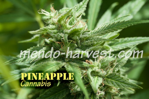 Pineapple-nameWM.jpg